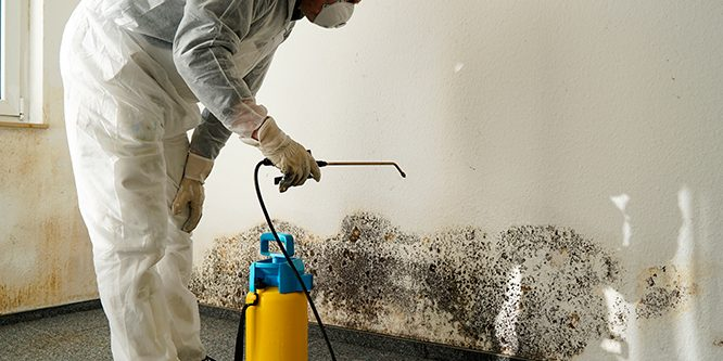 What to Expect from Professional Biohazard Cleanup Services?